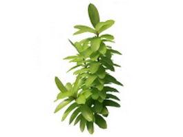 Spring branch leaves 3d model