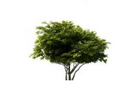 Mulberry tree 3d model