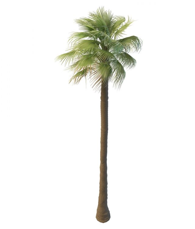 Tall Mexican Fan Palm Tree 3d Model 3ds Max Files Free Download Modeling 30367 On Cadnav
