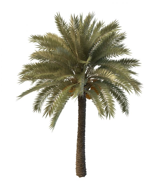 Palm Tree With Seeds 3d Model 3ds Max Files Free Download