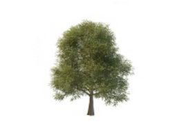 Silver Elm Tree 3d model
