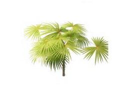 Latania fan palm tree 3d model
