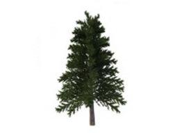 Japanese red pine 3d model