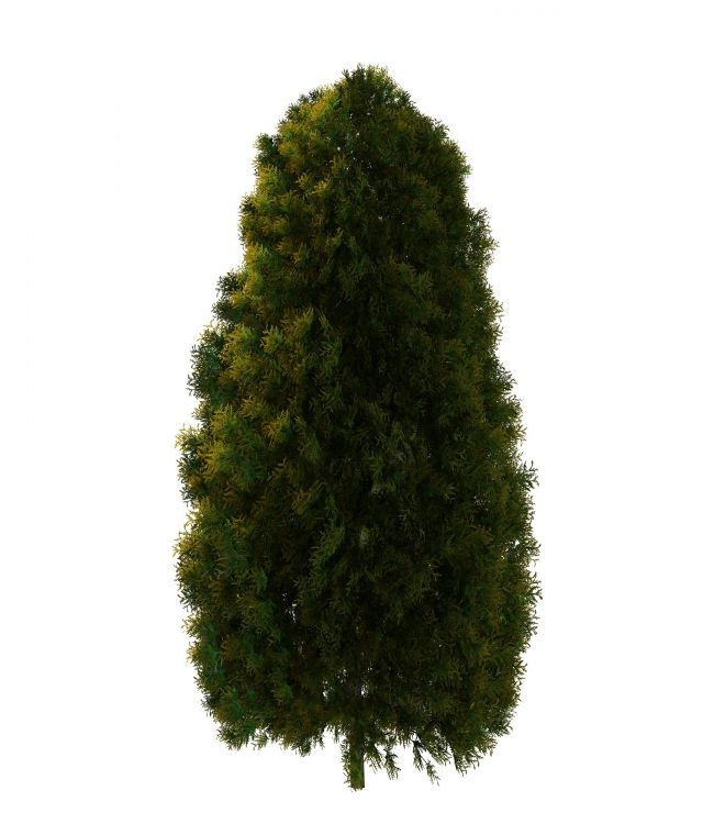white cedar tree 3d model 3ds max files free download