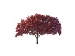Dark red maple tree 3d model