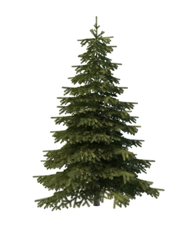 Mountain Spruce Tree 3d Model 3ds Max Files Free Download