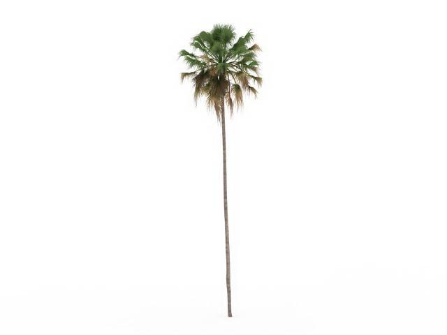 Thin Christmas Tree
