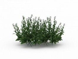 Flowering herbs 3d model