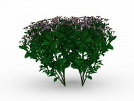 Small herb with purple flowers 3d model