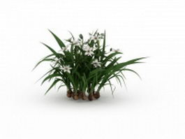 Narcissus plants with flowers 3d model