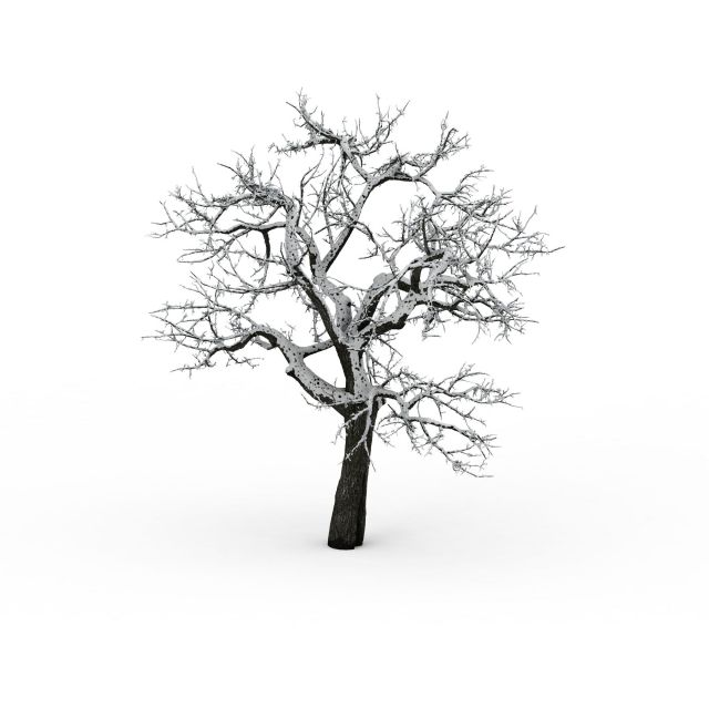 The Old Tree In Winter 3d Model 3ds Max Files Free