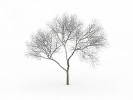 Bare tree covered in snow 3d model