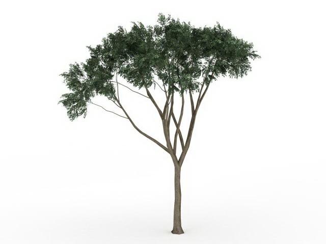 Eucalyptus Tree 3d Model 3ds Max Files Free Download