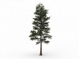 Loblolly pine tree 3d model