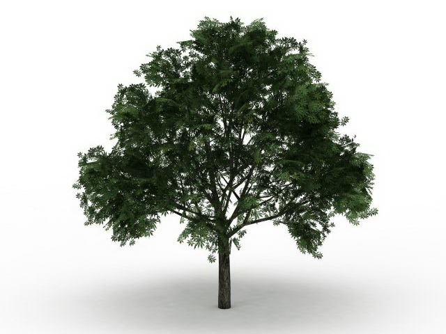 American Buckeye Tree 3d Model 3ds Max Files Free Download