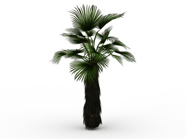 Japanese Fan Palm Tree 3d Model 3ds Max Files Free
