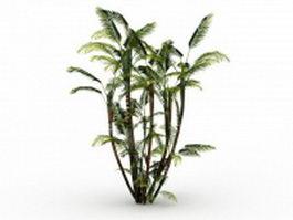 Butterfly palm plant 3d model