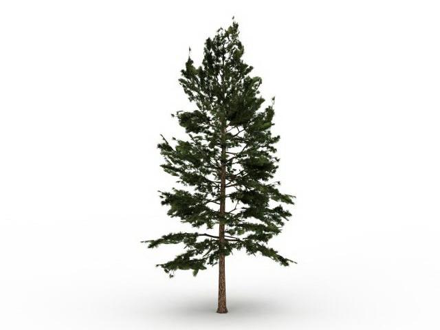 Eastern white pine tree 3d rendering