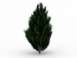 Pinus patula tree 3d model