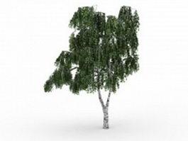 Betula tree 3d model