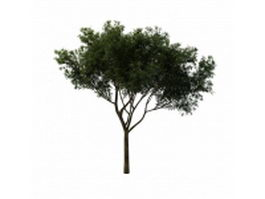 Peachleaf willow tree 3d model