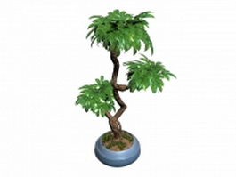Indoor bonsai tree 3d model