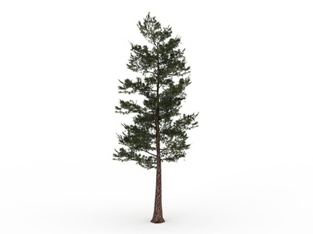 ponderosa pine tree 3d model 3ds max files free download