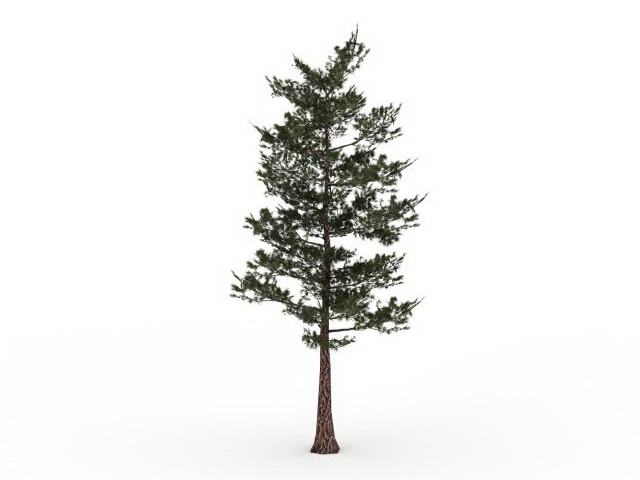 southern pine tree 3d model 3ds max files free download