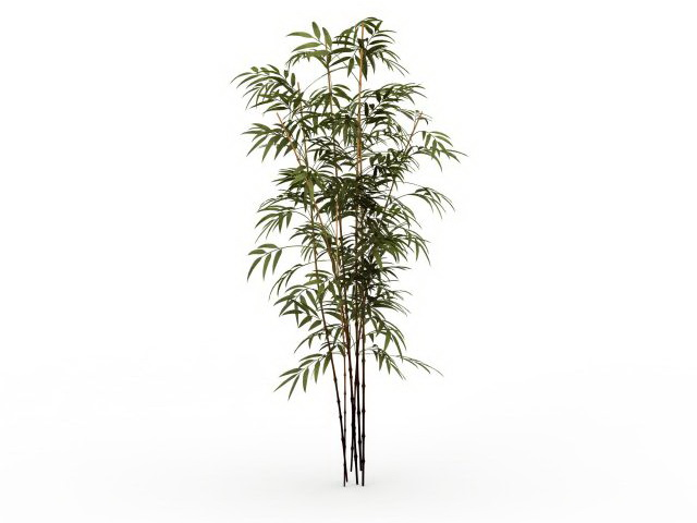 Bamboo Plants 3d Model 3ds Max Files Free Download