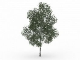 Shamel ash tree 3d model