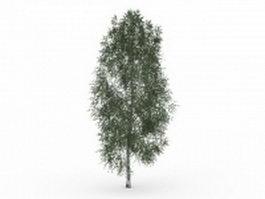 California ash 3d model