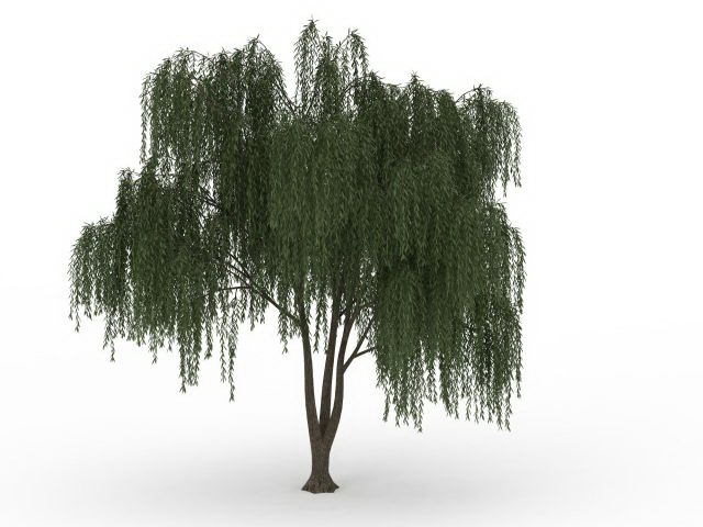 Weeping Willow Tree 3d Model 3ds Max Files Free Download