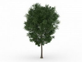 Beautiful green tree 3d model