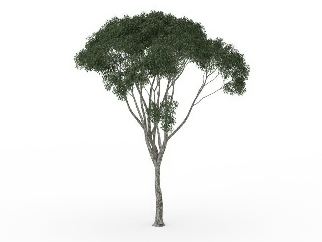 Small Kapok Tree 3d Model 3ds Max Files Free Download
