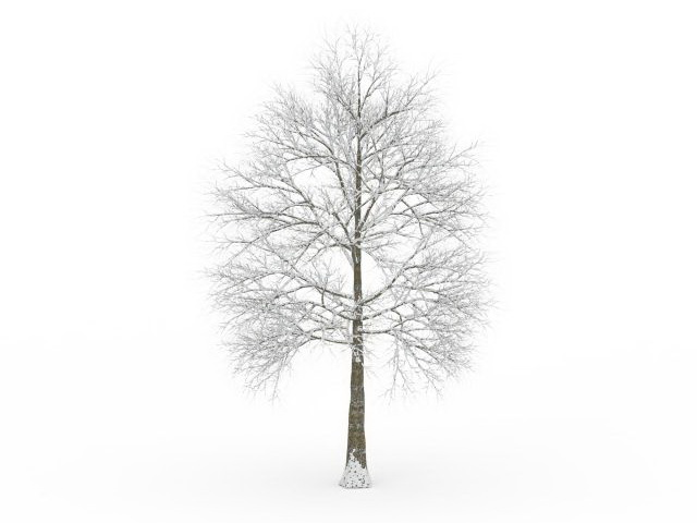 Winter Tree 3d Model 3ds Max Files Free Download