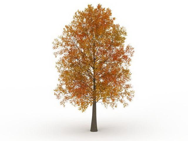 Autumn Poplar Tree 3d Model 3ds Max Files Free Download