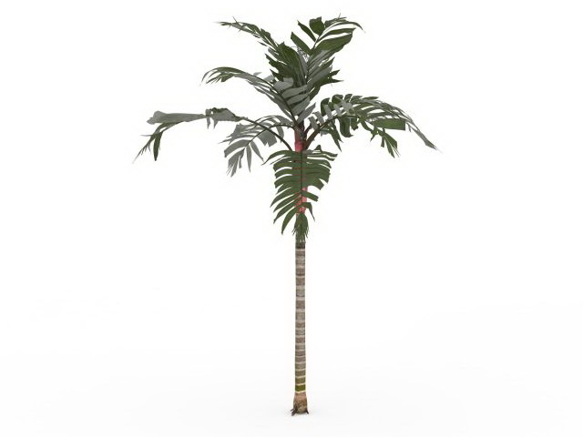 Tropical Palm Tree 3d Model 3ds Max Files Free Download