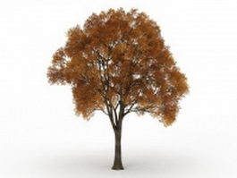 Old tree with fall colors 3d model