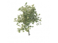 Small evergreen tree 3d model