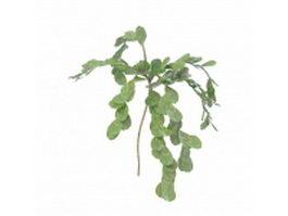Round leaf herb 3d model