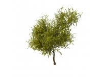 Willow tree branches 3d model