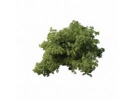 Thick dwarf tree 3d model