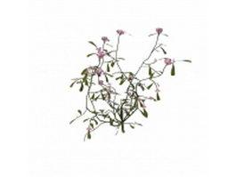 Pink flowering herb 3d model