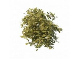 Evergreen dwarf shrubs 3d model