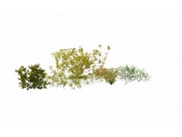 Shrubs and bushes for landscaping 3d model