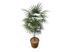 Potted fan palm tree plant 3d model