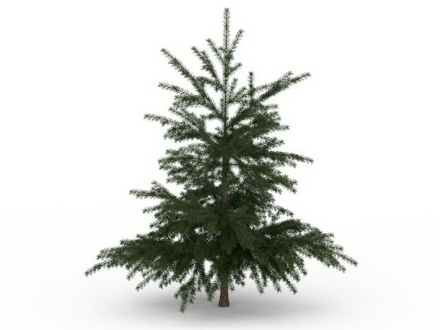 European Larch Tree 3d Model 3ds Max Files Free Download