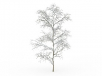 Snow covered tree in winter 3d model
