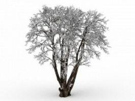 Old tree in snow 3d model