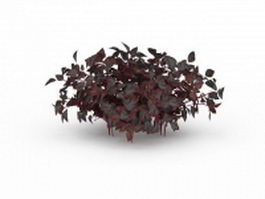 Purple amaranth plant 3d model